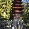 Touring the Japanese tea gardens at Golden Gate park.