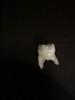Luke's Monster Tooth