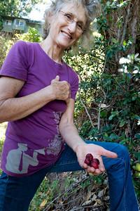 Strawberry Guava- Garden Rita Okeane in Haiku