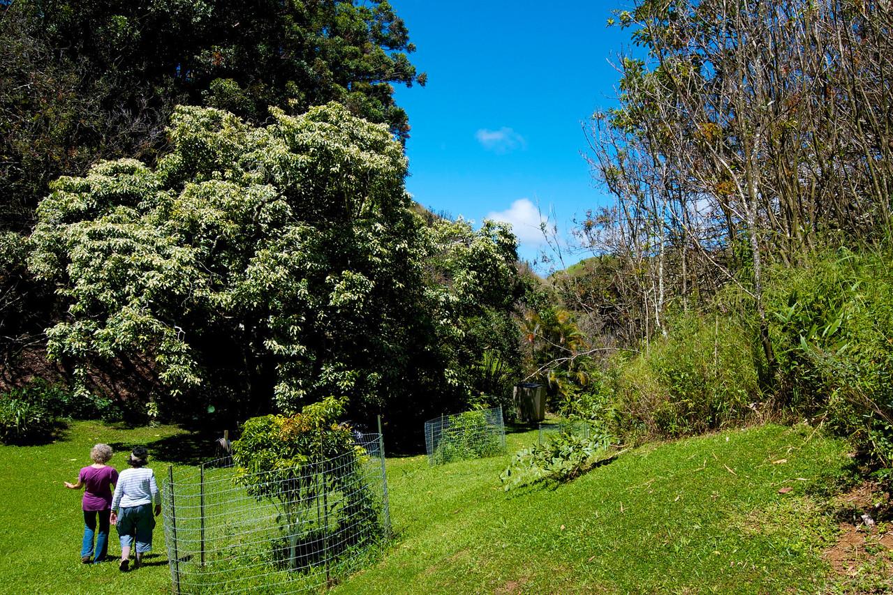 Garden Rita Okeane in Haiku- mowed once a week!