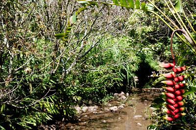 Creek- Garden Rita Okeane in Haiku