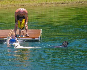 dogs & boys swimming