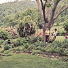 May 1975:  Sylvia's flower garden in full bloom.