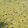 Leaves in duckweed on pond.