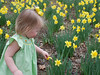 Claire being very gentle with the daffodils.  She knows she isn't supposed to pick them.