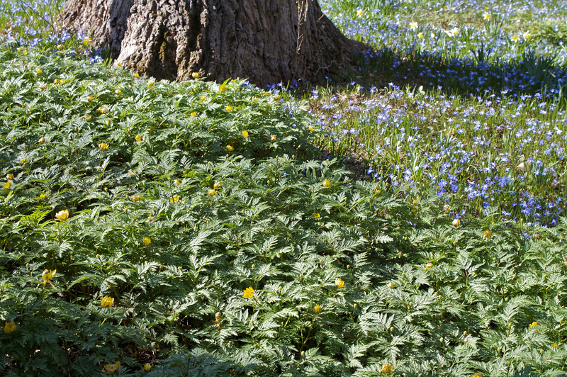 Adonis on the March Bank