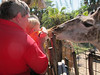 Bryan said this was getting too close!  Lowery Park Zoo, Tampa, 3/16/2013