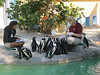 Penguins, Lowery Park Zoo, Tampa, 3/16/2013