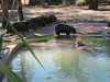 Mother hippo and baby, Lowery Park Zoo, Tampa, 3/16/2013