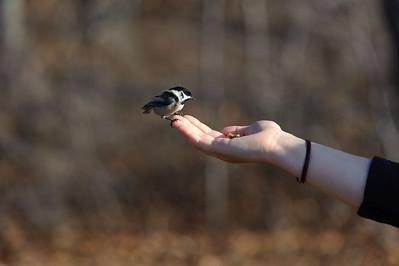 2011/11/25 Hawkwatch Birds