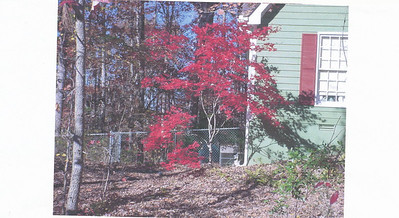 One side of Marilyn's property in the fall