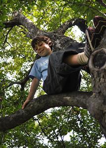 Henry in tree5x7