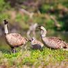 Kanaha Pond State Wildlife Sanctuary