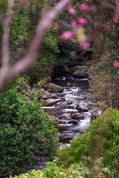 Iao Valley Stream