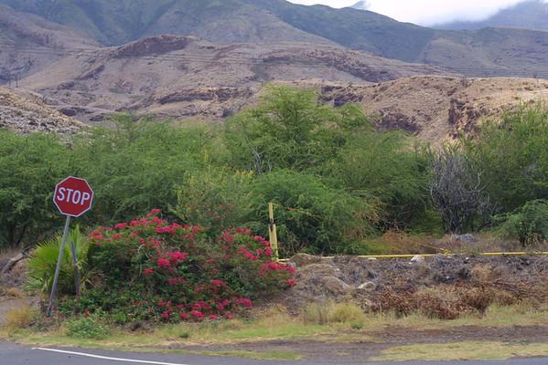 Maui - Jessica's photos