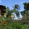 """Mau Tropical Plantation.<br /> <a href=""""http://mauitropicalplantation.com/#welcome"""">http://mauitropicalplantation.com/#welcome</a>"""