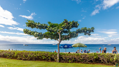 Tree at Kaanapali Beach facing the ocean