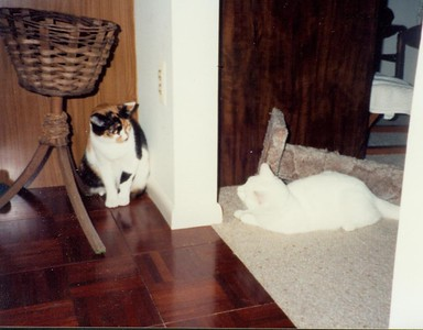 Stalking Sarah The Cat (my mom's cat).  In my parent's house in Bayville, NJ circa 1995 or 1996.