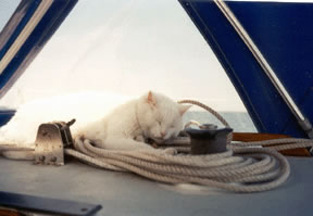 When we were living aboard the boat, he'd head out at night and find some bird to bring back and eat it up right in the boat's salon.  Feather's everywhere, but a very happy smiling cat. In general, if he got out, interesting things would happen. I've received calls after he had figured out how to get into the Carrier Dome stadium in Syracuse, and on another occasion had gotten onto Old Ironsides (I got a call from the Boston Historic Federation).  He was very welcomed by all of the other liveaboards in the marina, except for one person who Max kept scaring when he'd hop up on his boat.  I think Max did it just to hear the guy yell.