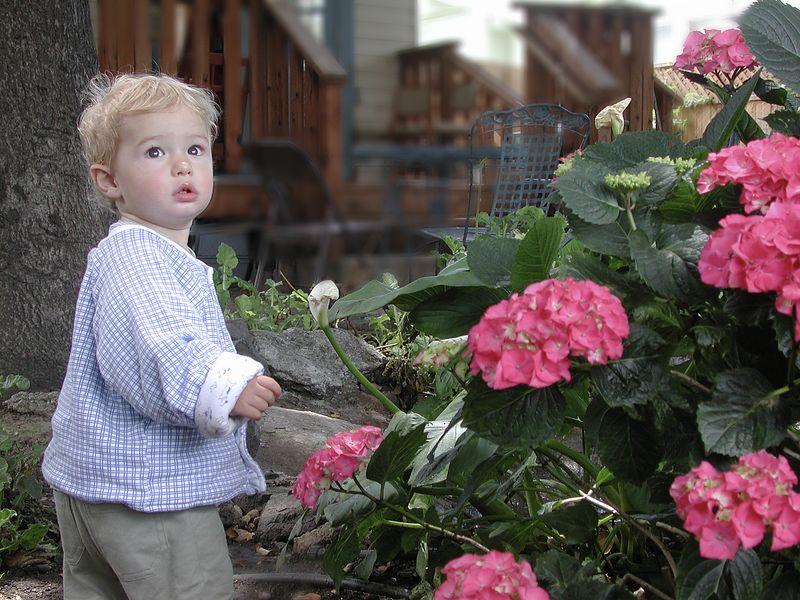 Buddy in Nana's back yard, 2005