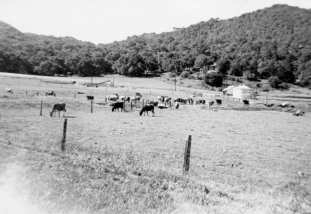 Royal Oaks Dairy about 1952 (?)  The calf barns are on the right with Grandma's house up the hill and the foundation for the new milking barn on the left.