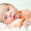 Baby Joey-2