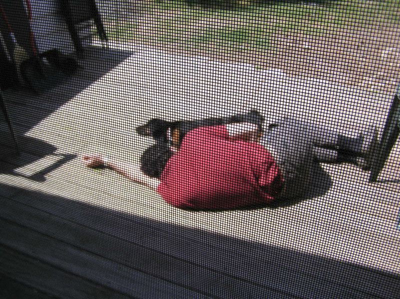 Seth and Scout napping on the porch