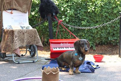 Street performer's dog