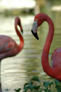 The resort had 2  flamingo pools.