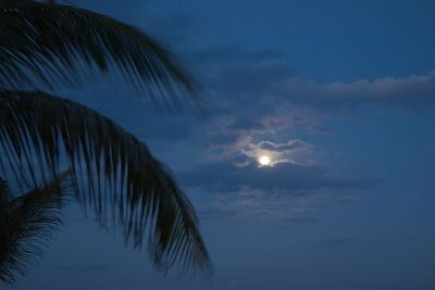Full moon, clouds, and palms.