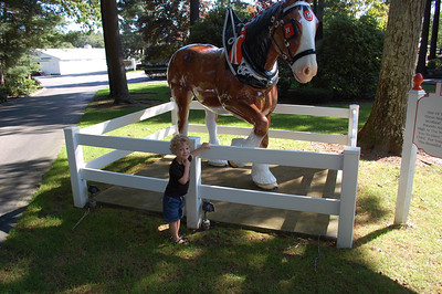 Michael and the Clydesdales