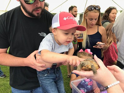 Asa, Daniel & the Turtle