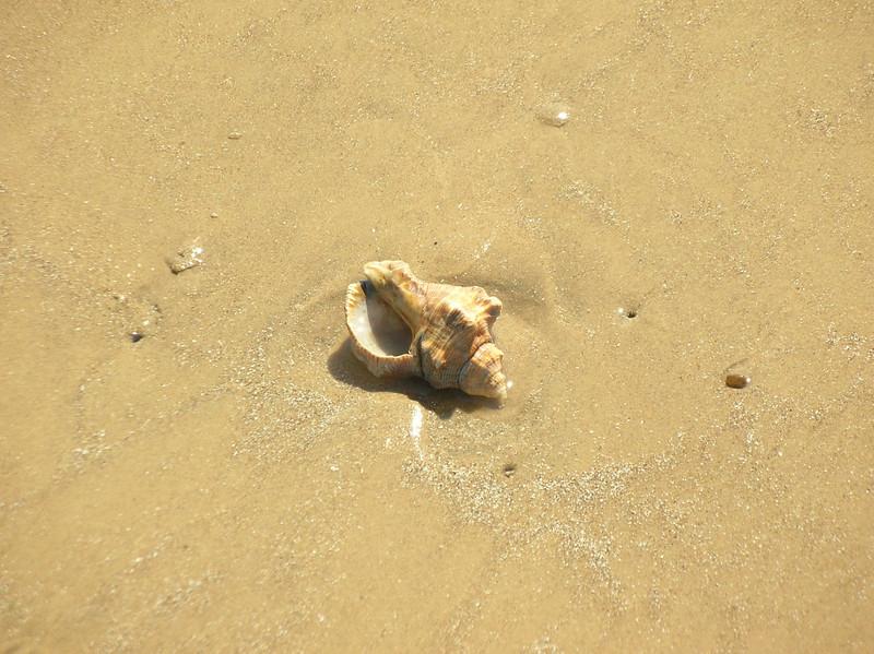 rock shell