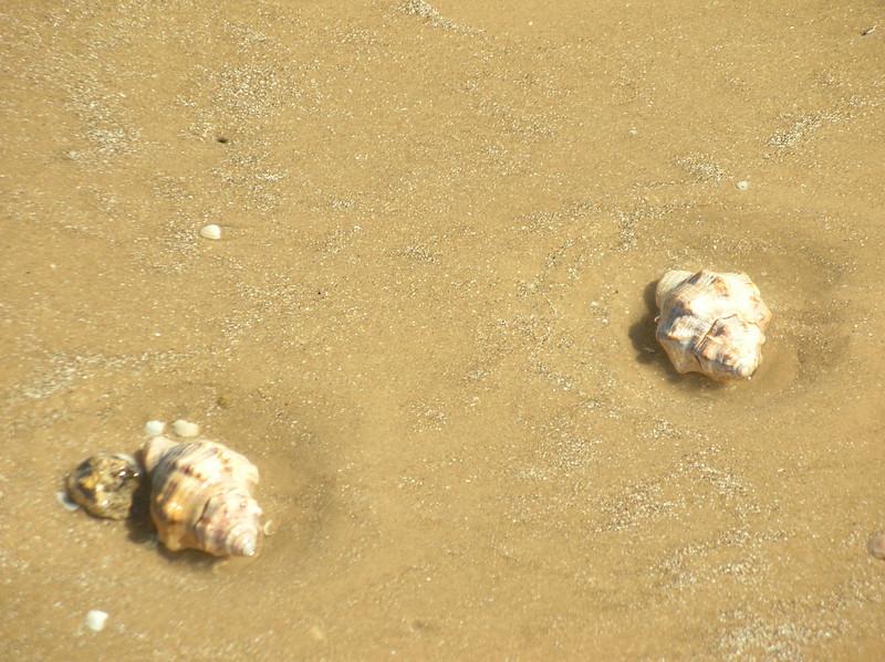 rock shells