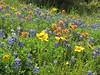6  fields of flowers