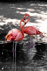 Zoo_2012-20120723-205-034