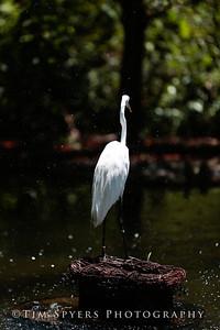 Zoo_2012-20120723-205-042