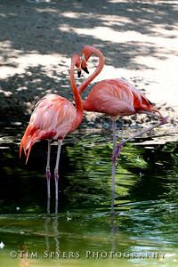 Zoo_2012-20120723-205-035