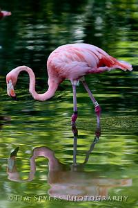 Zoo_2012-20120723-205-031