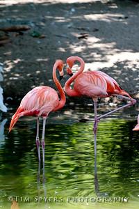 Zoo_2012-20120723-205-036