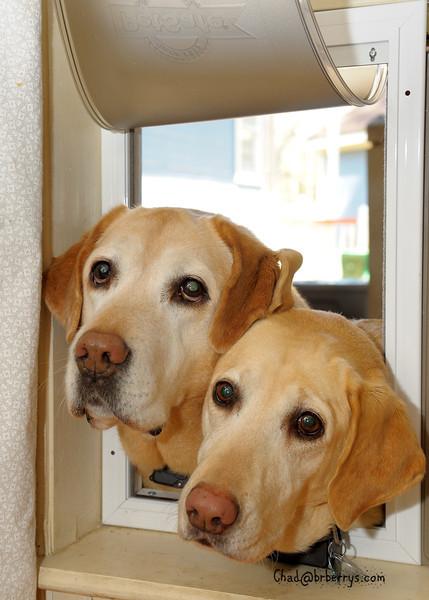 Old dogs, new dog door.