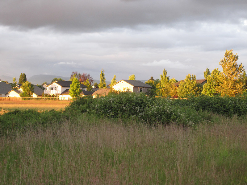 On June 19, 2010, I flew back to Eugene.  It was a long day, both flights had delays, but I got home eventually.  I was rewarded with that beautiful late afternoon light we sometimes get, when the sun is shining beneath a dark cloudy sky.
