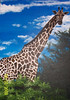 Painted Giraffe of Krista's Picture From Africa