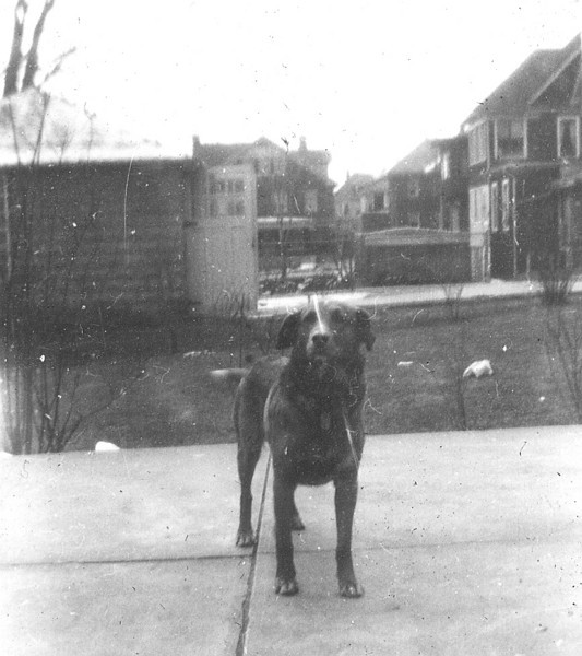 Don - 139 Leroy Street, before the Granada's fence and bushes.