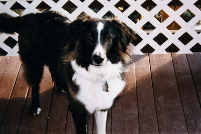 Mom's dog Katie