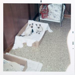 Bambi and ? - Grandma Jo's cats
