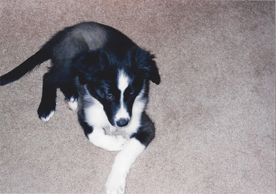 Mom and Dad's dog Katie - as a puppy
