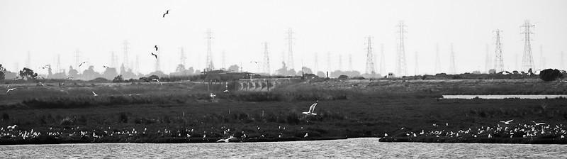 If you look towards the northwest from the Bayland's main loop, you can see all these electrical towers. I've never noticed them before. They look a bit ominous.