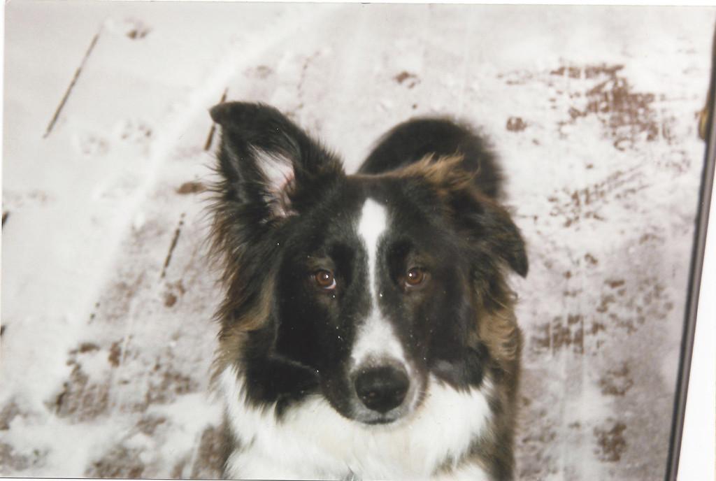 Mom and Dad's pet dog, Katie