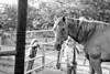 horse-girls008